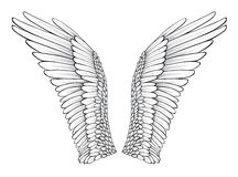 Wings. (Realistic Illustration / Design Elements Royalty Free Stock Photography