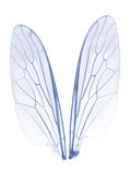 Wings 2 Royalty Free Stock Images