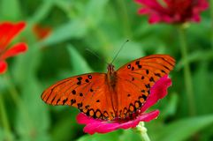 Wings. A butterfly and flowers Stock Images
