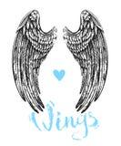 Wings of bird Stock Image