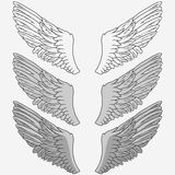 Wings of bird set. Hand drawn angel wing. vector Stock Image