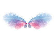Wings with blue and pink feathers Stock Image
