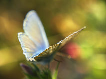 Wings of a Butterfly. Over blurry yellow green background Royalty Free Stock Photos