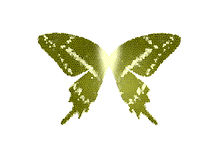 Wings Butterfly Green color stain glass on white isolate Stock Photo
