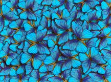 Wings of a butterfly Morpho. Flight of bright blue butterflies abstract background royalty free stock photo