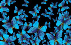 Wings of a butterfly Morpho texture background. Wings of a butterfly Morpho. Flight of bright blue butterflies abstract background Stock Images
