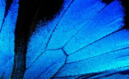 Wings of the butterfly Ulysses. Closeup. Wings of a butterfly texture background Stock Photos