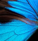 Wings of the butterfly Ulysses. Closeup. Wings of a butterfly texture background Royalty Free Stock Photos