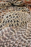 Wings feathers pheasant Royalty Free Stock Photo