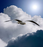 Wings of freedom. The freedom to fly in an open sky royalty free stock photo