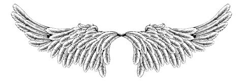 Wings Stock Images
