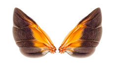 Wings of insect Stock Image