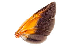Wings of insect Royalty Free Stock Images