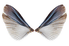 Wings of insect isolated on a white Royalty Free Stock Images