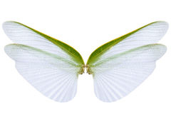Wings of insect  on white background Stock Image