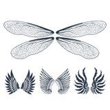 Wings isolated animal feather pinion bird freedom flight natural peace design vector illustration. Royalty Free Stock Image