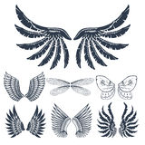 Wings isolated animal feather pinion bird freedom flight natural peace design vector illustration. Royalty Free Stock Images