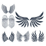 Wings isolated animal feather pinion bird freedom flight natural peace design vector illustration. Stock Images