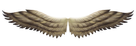 Wings isolated Royalty Free Stock Photography