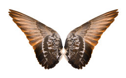 Wings isolated on white background stock photography