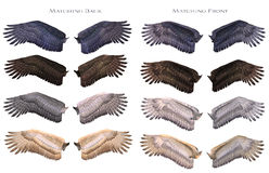 Wings matching Royalty Free Stock Photography