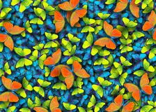 Free Wings Of A Butterfly Morpho. Flight Of Bright Blue, Orange And Yellow Butterflies Abstract Background. Royalty Free Stock Photography - 113129937