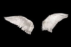 Wings over black. Two wings isolated on black background Royalty Free Stock Photo