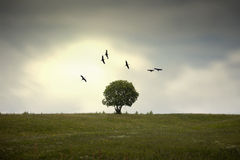 Wings over the tree. Many big birds flying over a tree and around a green meadow stock illustration