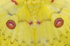 Wings pattern of moth Royalty Free Stock Image
