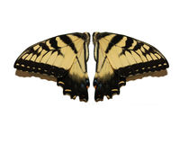 Wings. Set of facing butterfly wings Stock Images