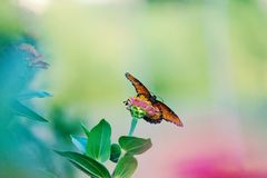 Wings spread butterfly stock photography