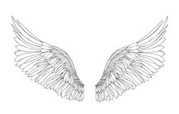 Wings. Vector illustration on white background. Black and white. Style Stock Photo