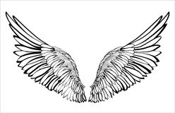 Wings. Vector illustration on white background. Black and white style.  Stock Photo
