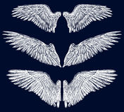 Wings. Vector image of different angelic wings Royalty Free Stock Photo