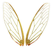 Wings (wth Path). A pair of cicada wings, with clipping path.  Perfect for any design where you need fairy gossamer wings.  Each wing photographed individually Stock Photos