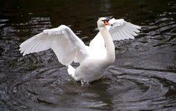wingspan arkivfoto