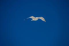 wingspan Fotos de Stock