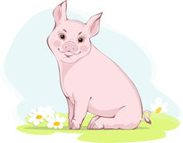 świnia Zdjęcia Stock