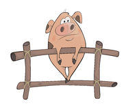 świnia kreskówka Fotografia Stock