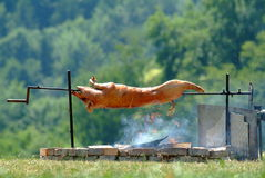 świnia osesek Fotografia Royalty Free