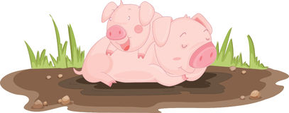 świnie ilustracji
