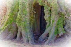Winieta wydrążenie w drzewie Obrazy Stock