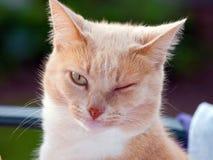 Wink Wink sagen no more Lizenzfreie Stockfotografie