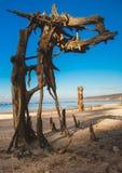 Winkelhaak op het strand Stock Afbeelding