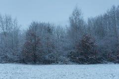 Winken Sie unscharfen Schneefall in Waldland an einem düsteren Tag zu Stockbild