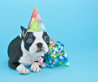 Winking Birthday Puppy. Royalty Free Stock Photography