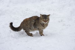 Winking cat. A little cat on the snow Stock Photo