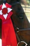 Winnaar Stock Fotografie