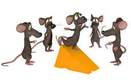 Winner - cartoon mice Stock Image