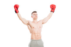 Winner or champion boxer. Raising arms in the air and wearing red boxing gloves royalty free stock images